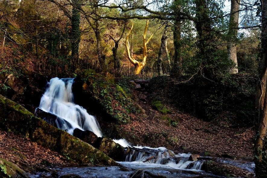 Ci-contre, l'œuvre de François Davin : L'Arbre d'Or, au milieu d'arbre calcinés par l'incendie.